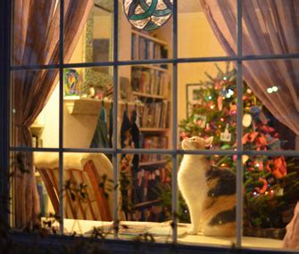pet proof  home   winter holidays
