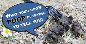 Dog Poo - Let U0026 39 S Probe Further