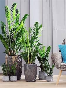 Pot Pour Plante : le pot parfait pour votre plante ma plante mon bonheur ~ Teatrodelosmanantiales.com Idées de Décoration