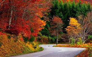 Nature, Landscape, Fall, Road, Trees, Forest, Colorful, Wallpapers, Hd, Desktop, And, Mobile