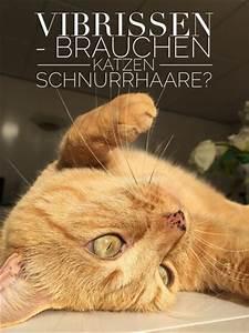 Was Brauchen Katzen : nacktkatzen fehlen sinnesorgane katzengenetik ~ Lizthompson.info Haus und Dekorationen