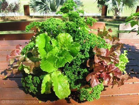 6 Tips For Abundant Edible Container Gardens