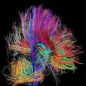 Controle Technique Grenade : les neurones c r braux en quations physiques ~ Gottalentnigeria.com Avis de Voitures