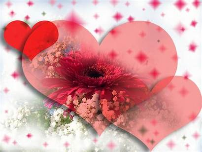 Abstract Heart Flower Pink Background