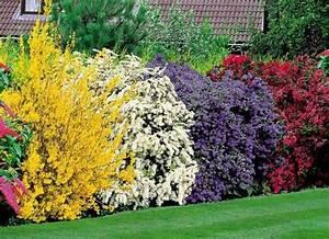 haie mixte fleurie jardin d39ornement garden deco With attractive idee de plantation pour jardin 3 planter une bordure vegetale amenagement de jardin