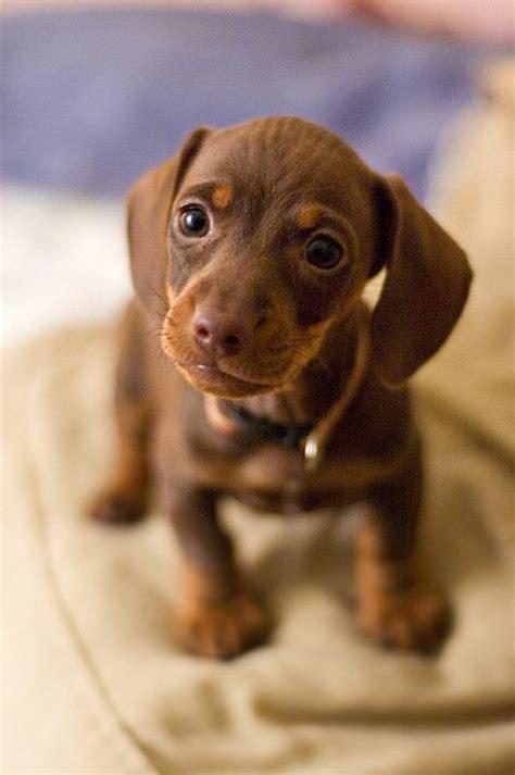 lit avec bureau intégré comment choisir chien nos conseilles en 45 photos
