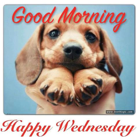 good morning happy wednesday pictures   images