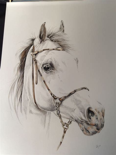 drawing horses drawings horse sketch animal paintings pencil sketches hand contour pen arts