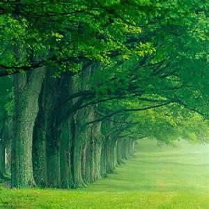 Row of Trees iPad Wallpaper ipadflava