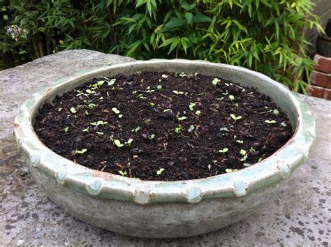 shallow stoneware planter jess halliday