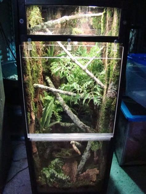 finished hell house gecko terrarium inspiration