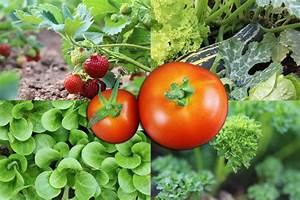 Ab Wann Erdbeeren Pflanzen : wann soll man tomaten pflanzen wann kartoffeln pflanzen kartoffeln pflanzen und ernten ~ Eleganceandgraceweddings.com Haus und Dekorationen