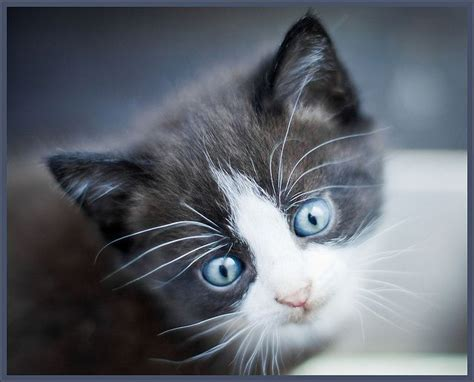 cats eye pupils very eyes why cat better remarkable different