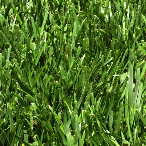 fescue sod harmony 500 sq ft fescue sod 1 pallet hh500f1 the home depot