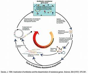 F  Facilitated Emergence Of Resistance In Human Pathogens