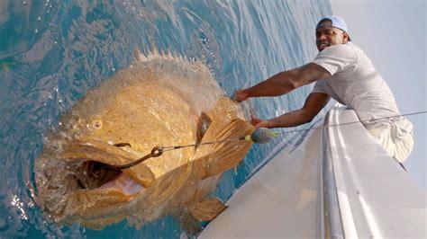 goliath groupers monster sam fishing nfl barrington biggest ever 4k grouper blacktiph linebacker giant king recorded hook shark episode bay