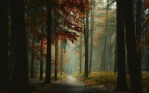 Nature, Landscape, Forest, Mist, Path, Trees, Morning