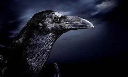Raven Dark Wallpapers Wallpapersafari Records