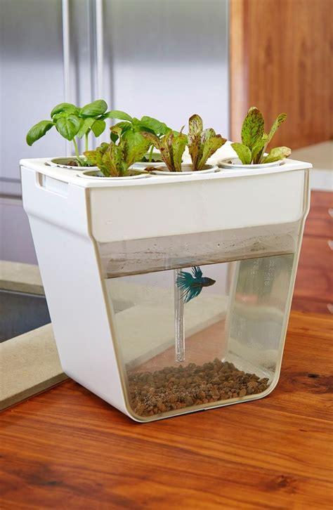 di system indoor aquaponics garden diy