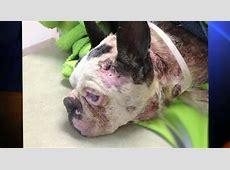 $5K Reward Offered in Horrific Case of Dog Abuse KTLA