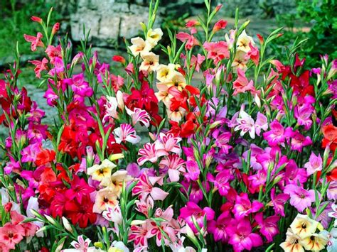 top ideas to plant bulk flower bulbs in landscape