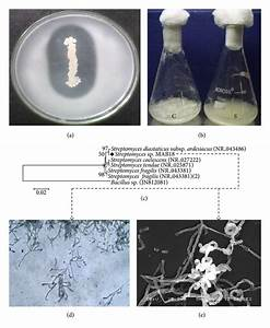 Production  Characterization And Antioxidant Potential Of Protease From Streptomyces Sp  Mab18