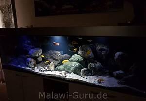 Aquarium Bodengrund Berechnen : malawi bodengrund vom malawisee ~ Themetempest.com Abrechnung
