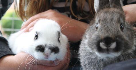 kaninchen in der wohnung die artgerechte haltung kaninchen in der wohnung
