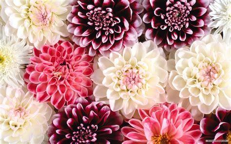 fond d écran fleur fond d ecran fleur fond d cran pc fleur fond d ecran fleur