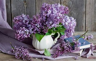 Lilac Still Bouquet Books Branches Telegram вконтакте