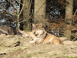 Tierpark Bad Mergentheim : ein besuch im wildpark bad mergentheim kinder ~ Watch28wear.com Haus und Dekorationen