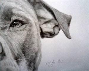 Pit-bull Drawing by Skyrah Saunders