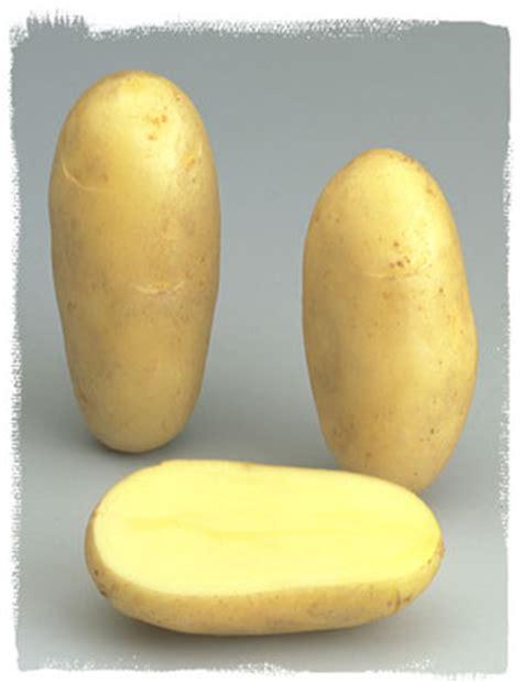 vari 233 t 233 amandine le plant fran 231 ais de pomme de terre
