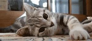 tumblr animals gifs | WiffleGif