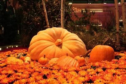 Pumpkin Wallpapers Landscape Nature Pc Tablet 1080p