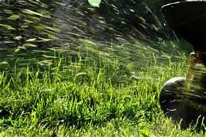 Rasen Vertikutieren Ja Oder Nein : mulchen mit rasenschnitt mulch selbst herstellen ~ Buech-reservation.com Haus und Dekorationen