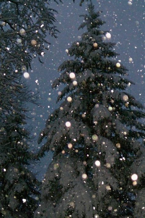 28 best christmas tree farms in northern illinois ben