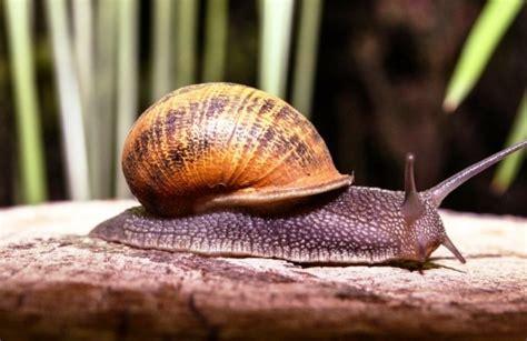 √ Perbedaan Hewan Vertebrata dan Invertebrata yang Perlu ...