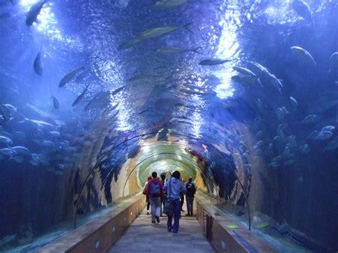 valencia aquarium spain world for travel