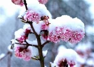 Rose De Noel Synonyme : des id es pour un jardin fleuri m me en hiver ~ Medecine-chirurgie-esthetiques.com Avis de Voitures