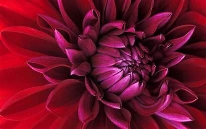 Windows Flower Wallpapers Wide