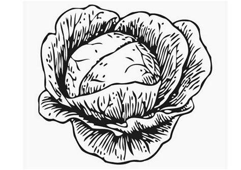 cuisine choux de bruxelles dididou coloriage légumes chou page 2