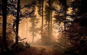 Autumn Mist In The Forest HD Wallpaper Wallpaper Studio