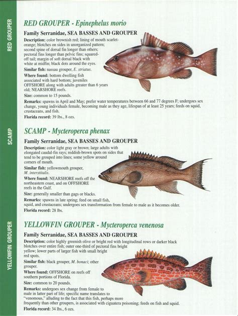 florida fishing fish charts gulf identification crystal river report enlarge guide