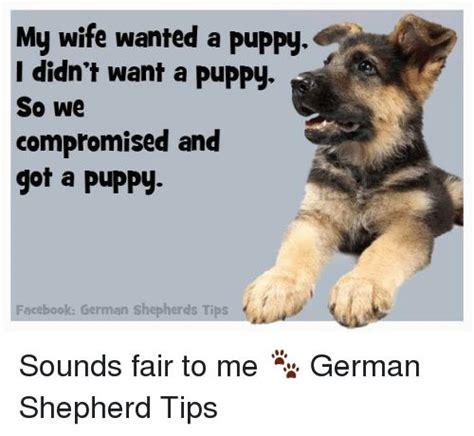 Funny German Memes - 25 great ideas about funny german shepherds on pinterest baby german shepherds german