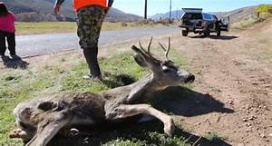 Should Citizens Be Allowed To Dispatch Suffering Animals