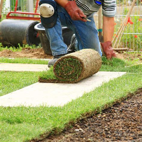 tappeti verdi formazione tappeti verdi erbosi con metodo tradizionale o