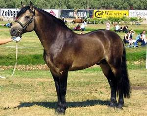 Bay or Brownskin? - The Horse Forum