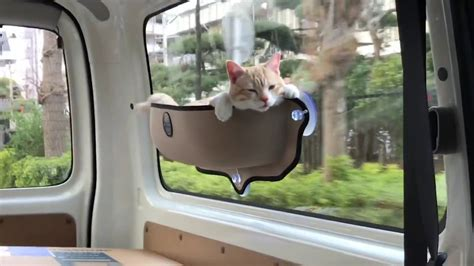 Cat In Hammock by Cat Hammock In Car