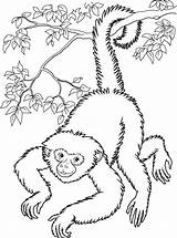 Monkey Coloring Pages Printable Adults sketch template